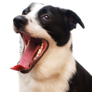 dog-open-mouth