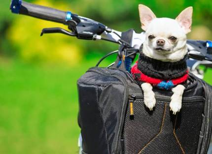 dogs-biking-basket
