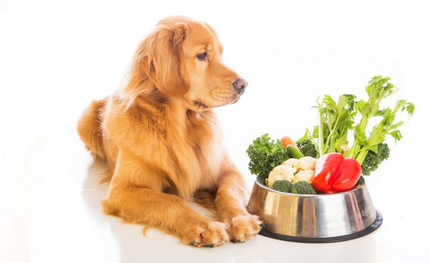 petsutra-vegetarian-dog-dog-with-green-vegetables