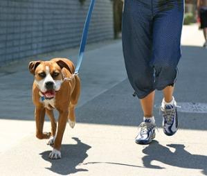 dog-exercise-335mk101111.jpg
