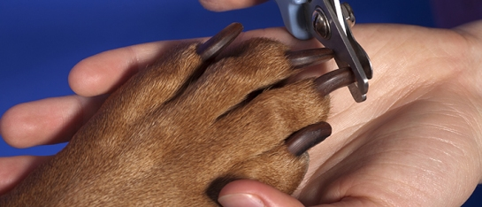 trimming-dogs-nails.jpg