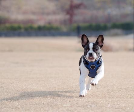 puppia-life-2.jpg