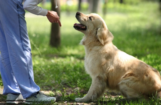 positive-reinforcement-dog-training.jpg